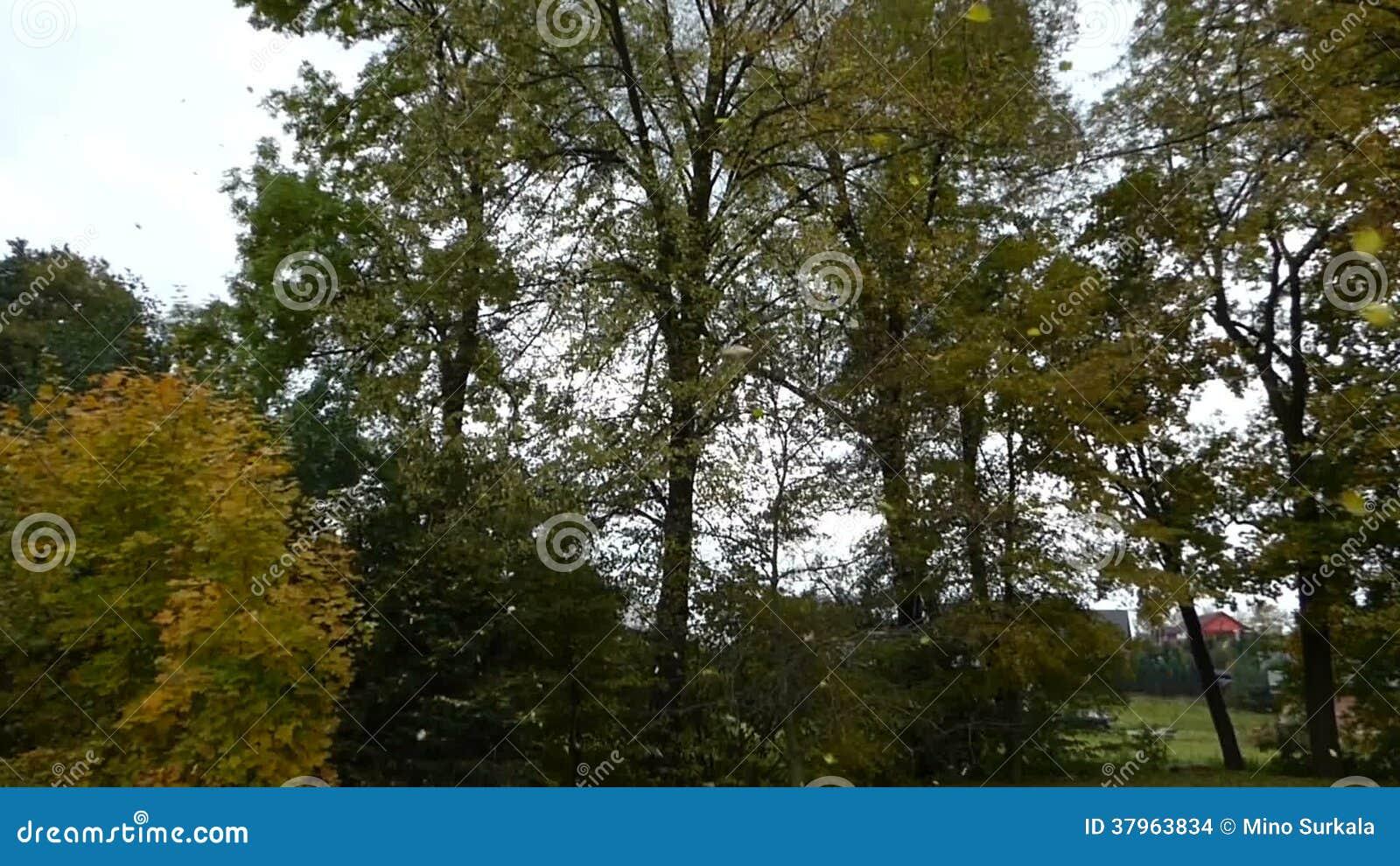 Baum fallen fabulous die usa erwgen den baum auf die liste der bedrohten oder gefhrdeten - Garten baum fallen ...