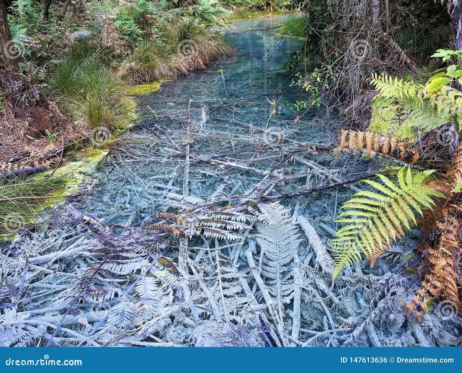 Blätter unter dem klaren Wasser