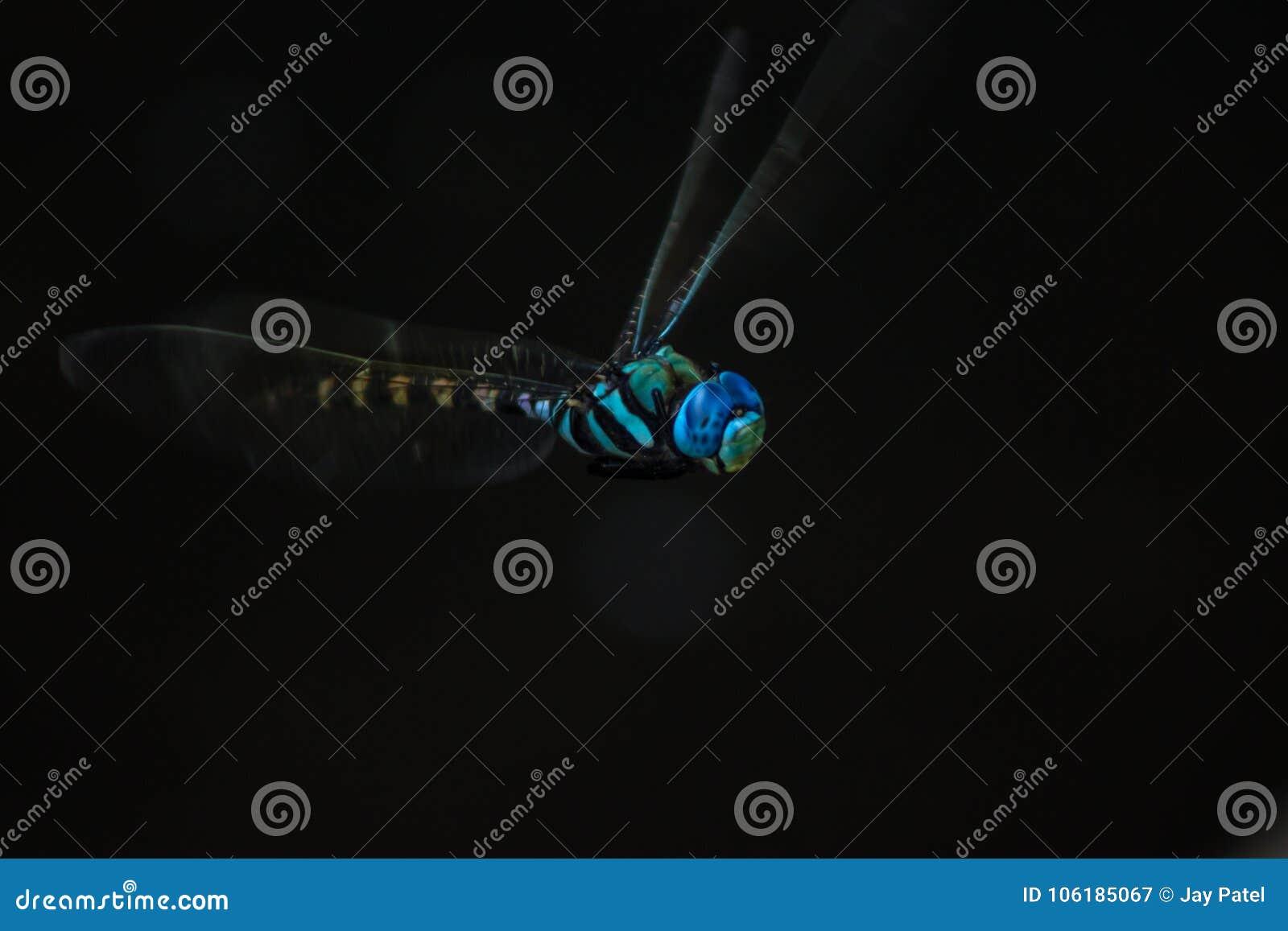 Blå dasherslända i fläckljus