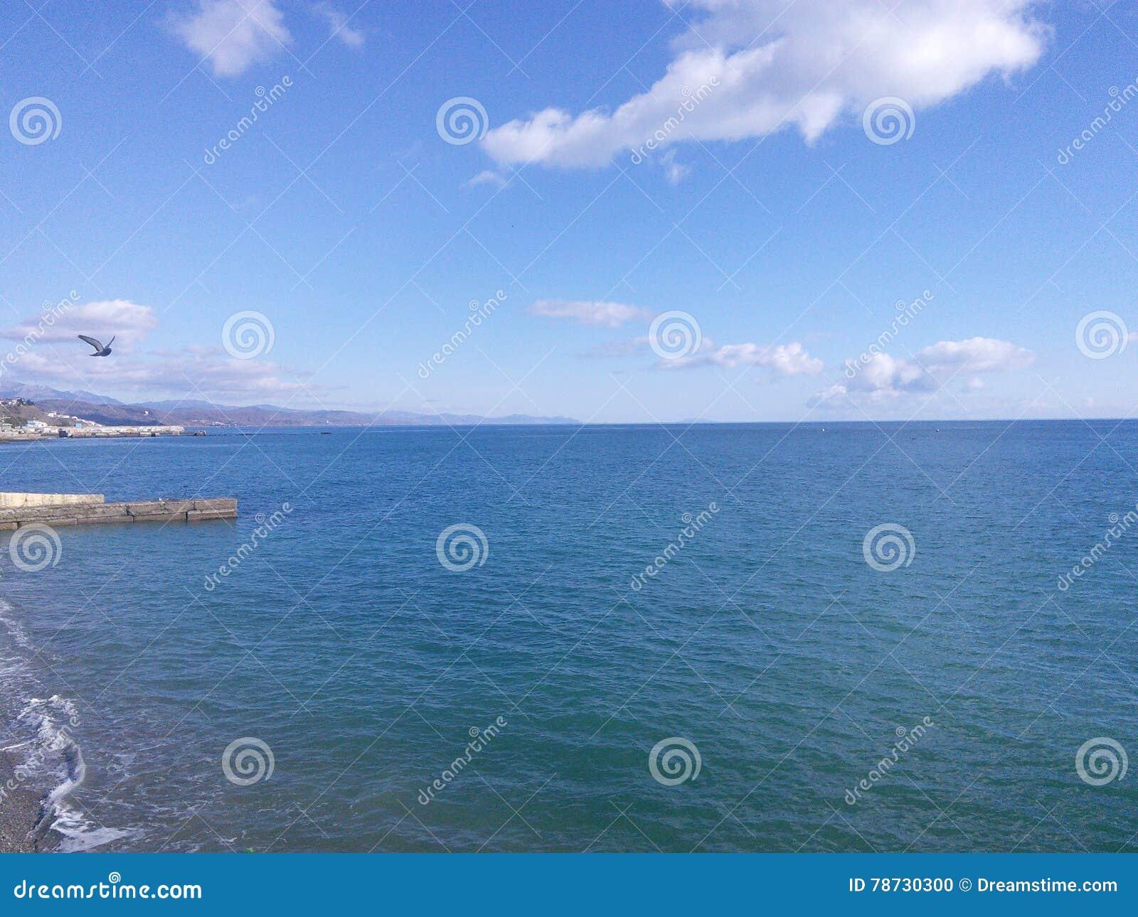 Blå färg av havet med vågbrytaren och seagullen