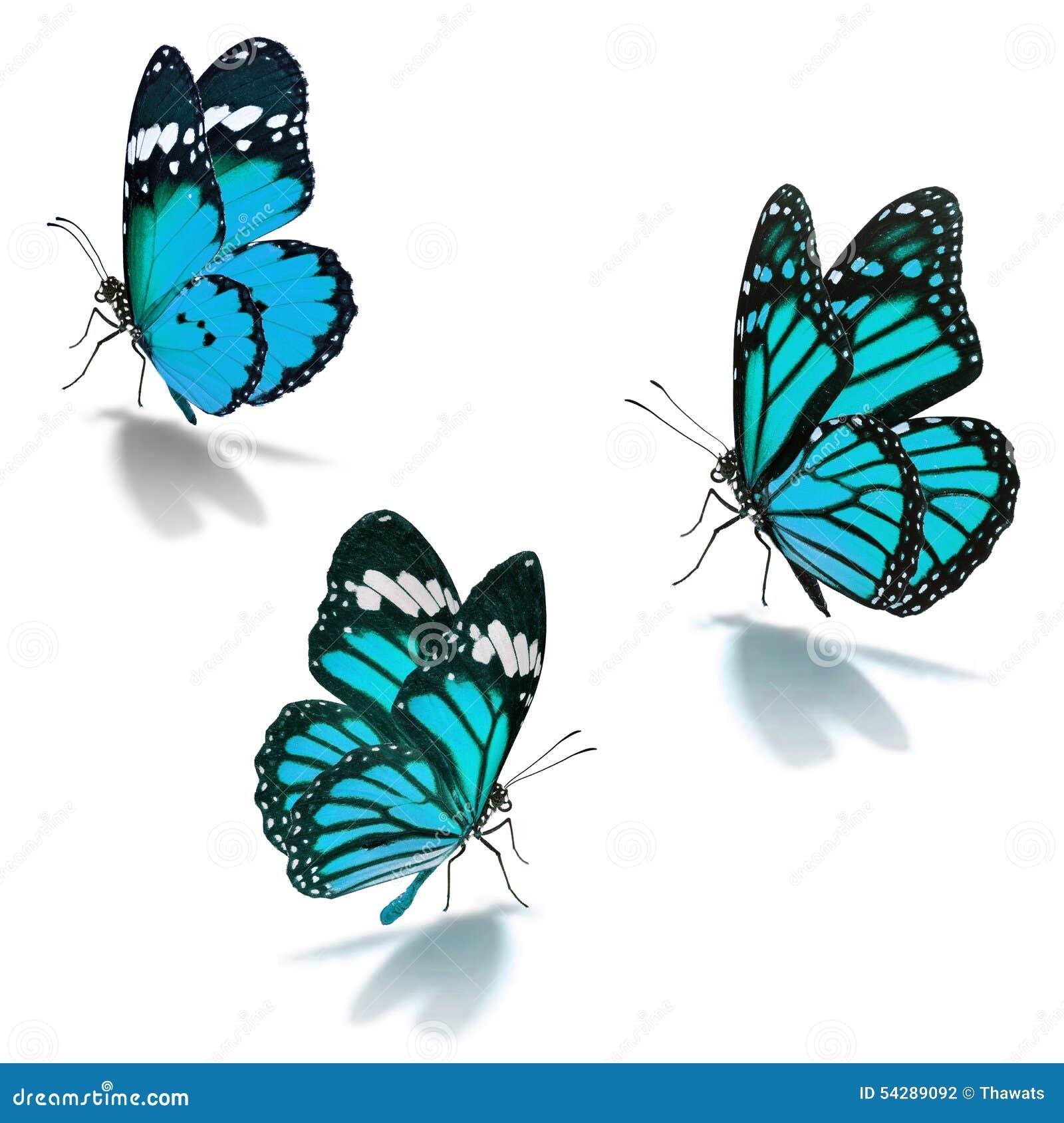 Blå fjäril för monark tre