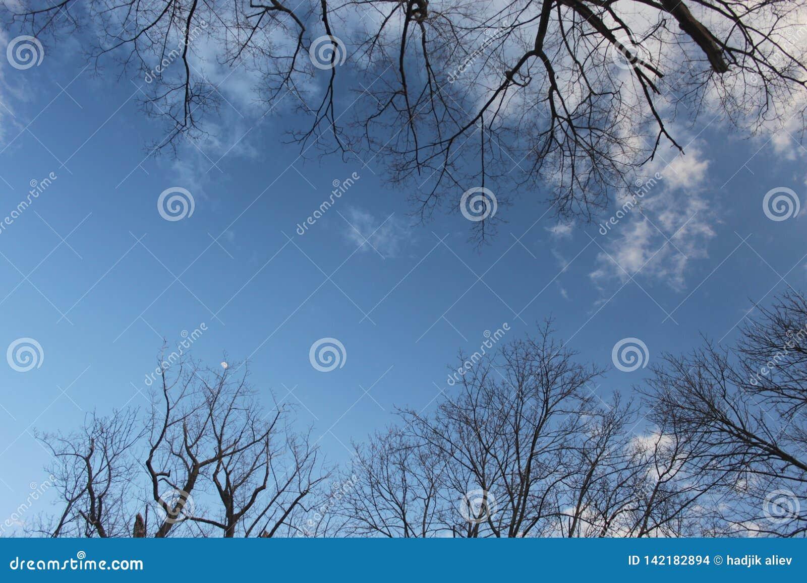 Blå himmel med moln som inramas av trädris