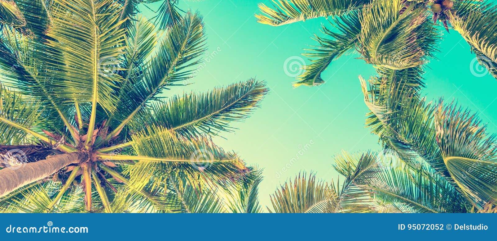 Blå himmel och palmträdsikt underifrån, tappningstil, panorama- bakgrund för sommar