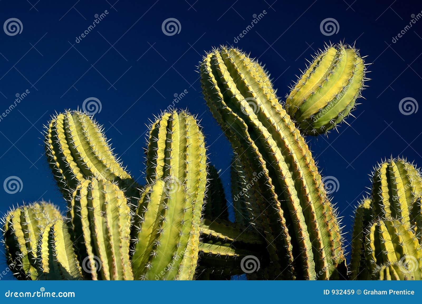 Blå kaktussky