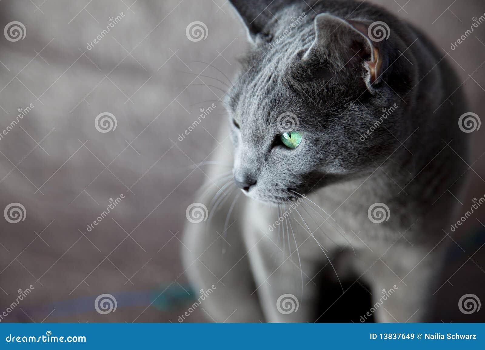 Blå kattryss