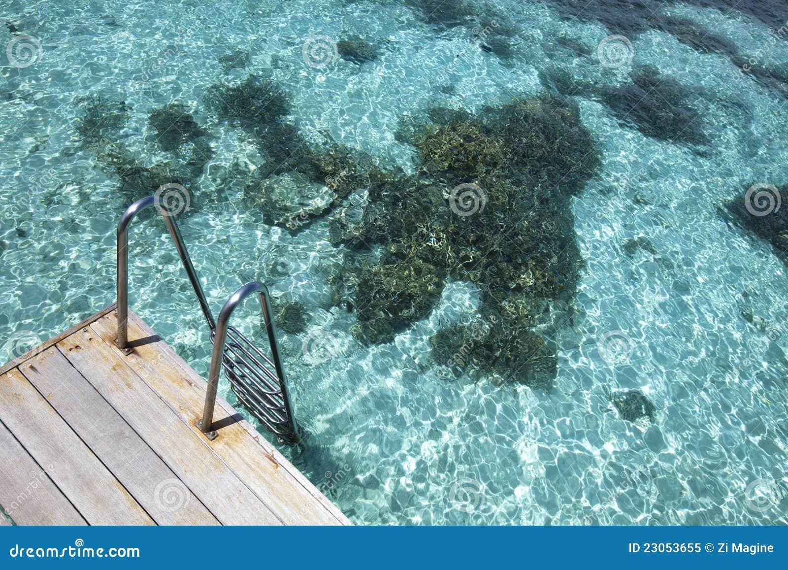 Blå lagunscale