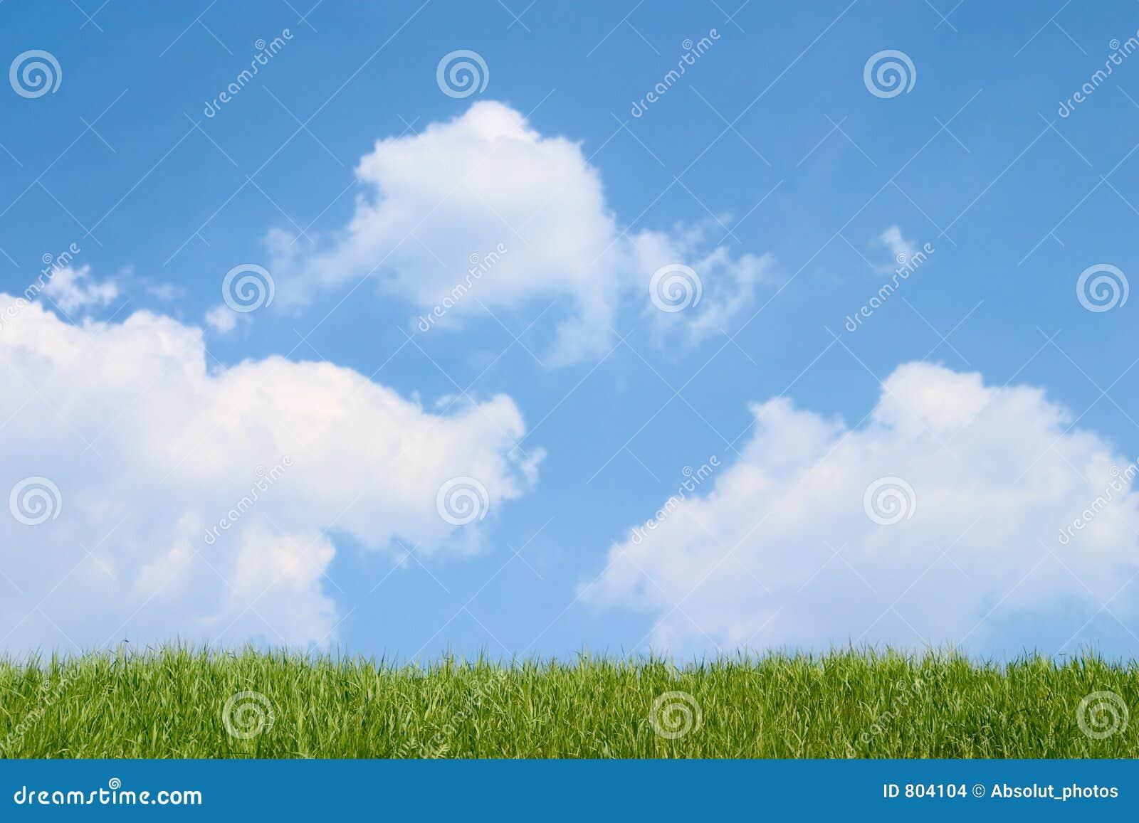 Blå molnig gräsgreensky