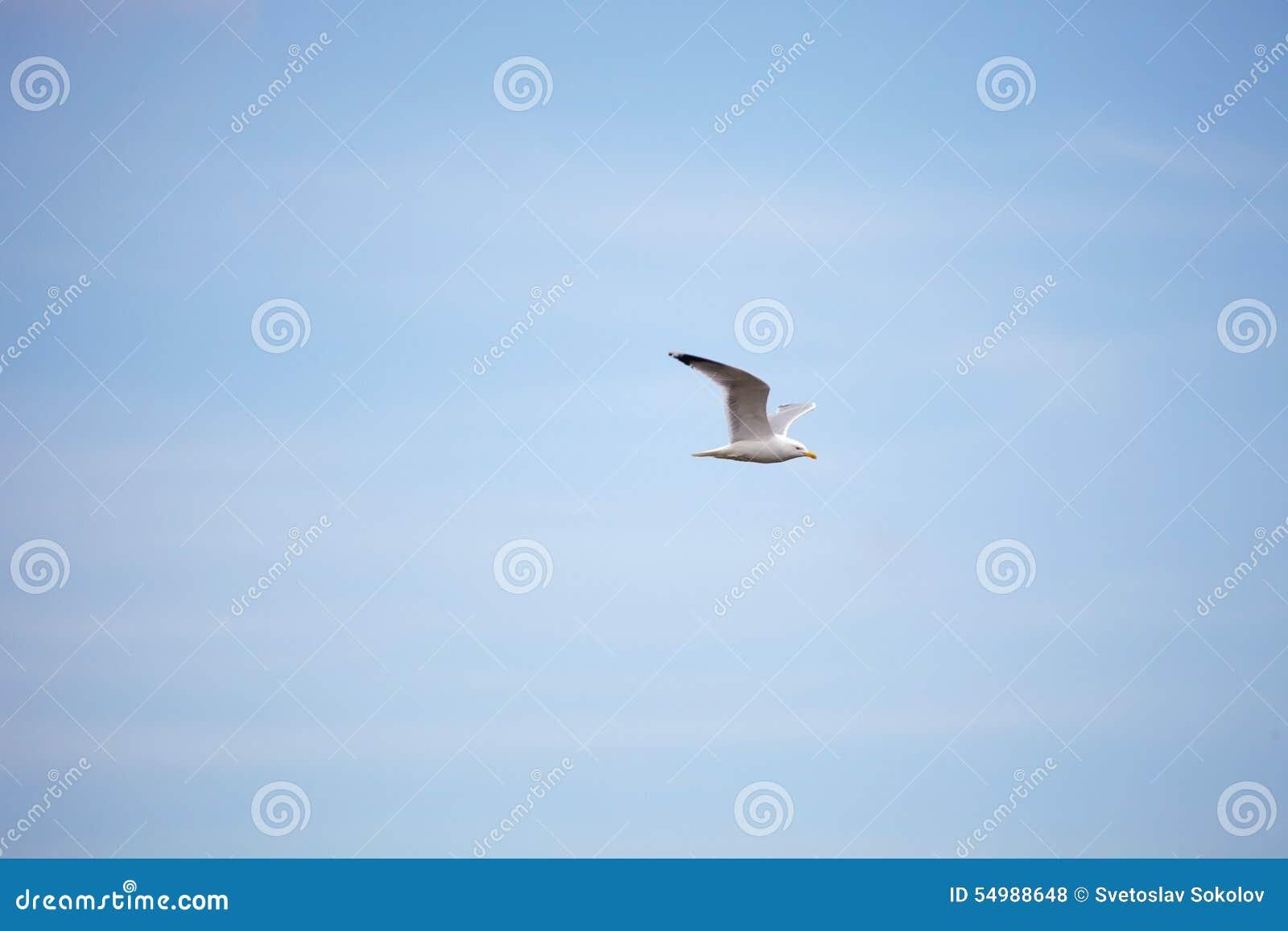 Blå seagullsky