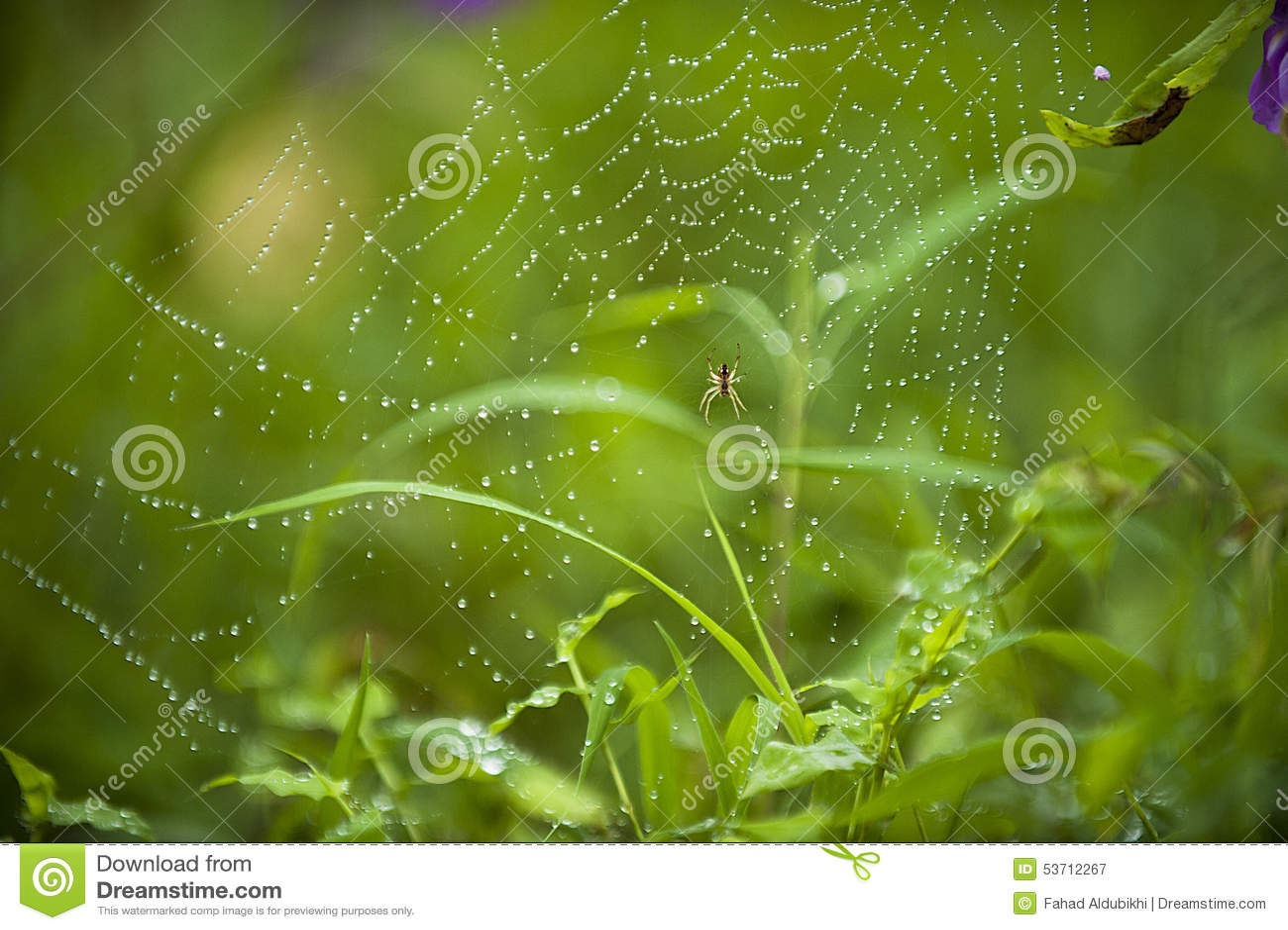 Blå slapp spindeltonrengöringsduk
