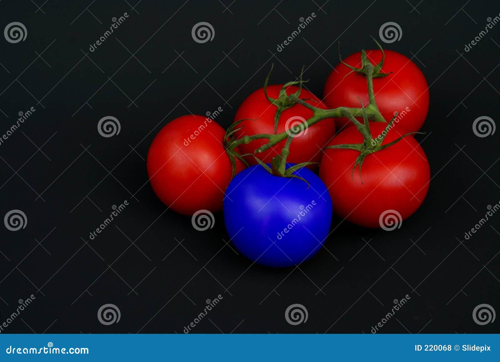 Blå tomat