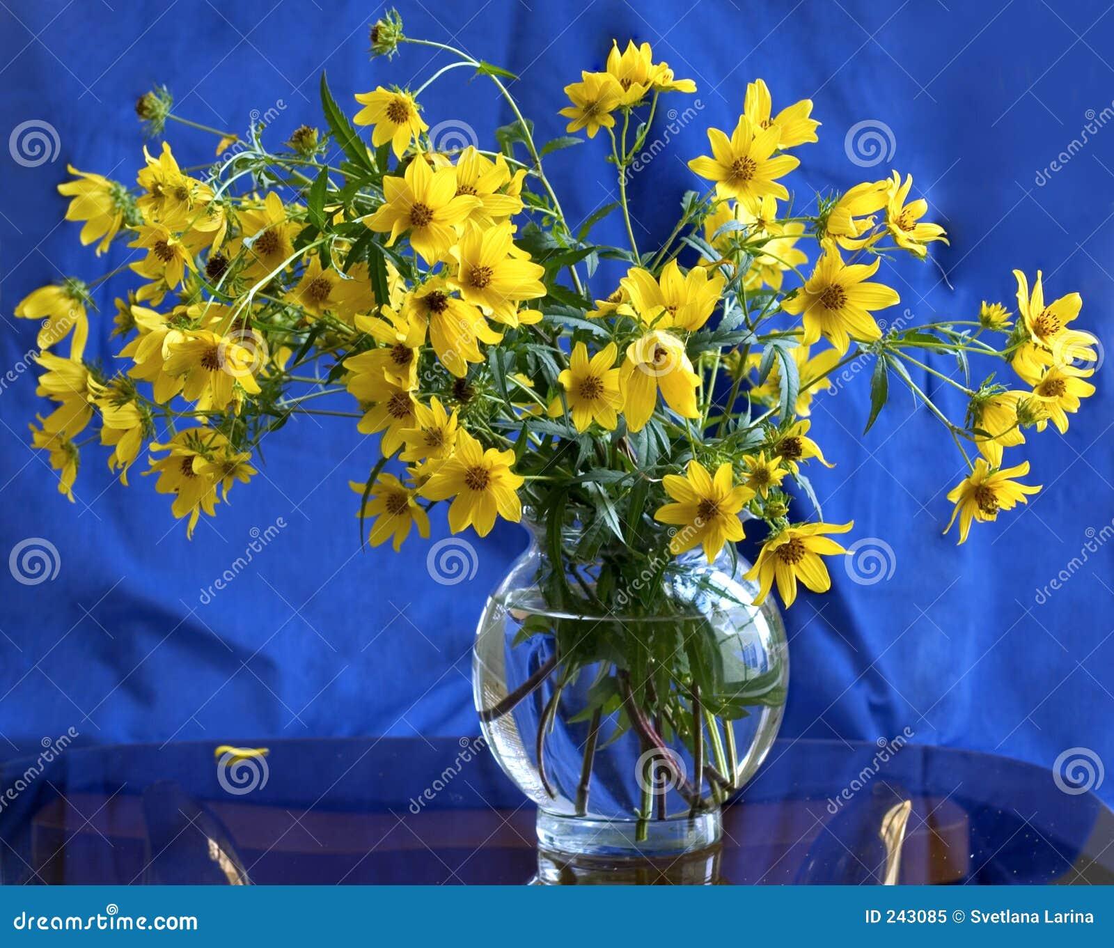 Blå yellow