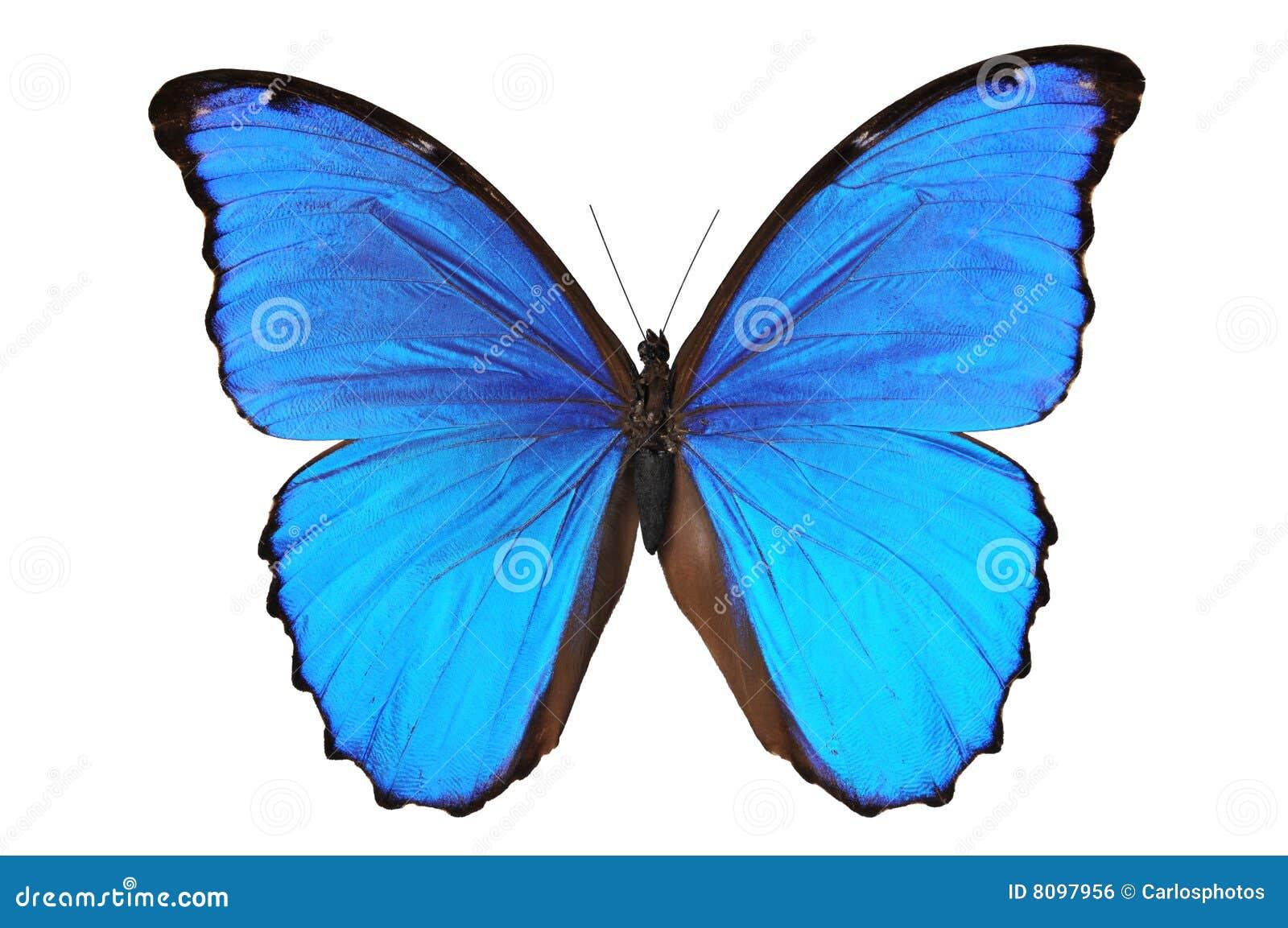 Blåa fjärilssignaler