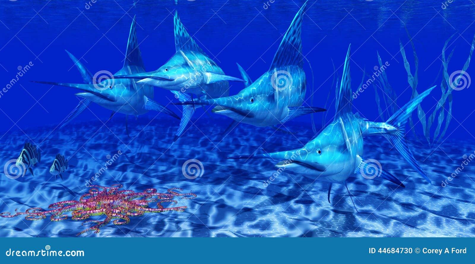Blåa Marlin Predators