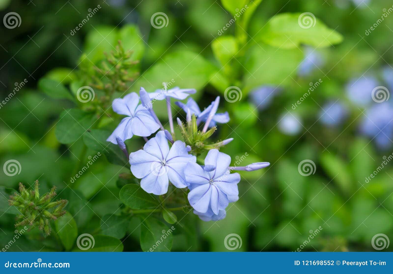Blåa purpurfärgade blommor i natur