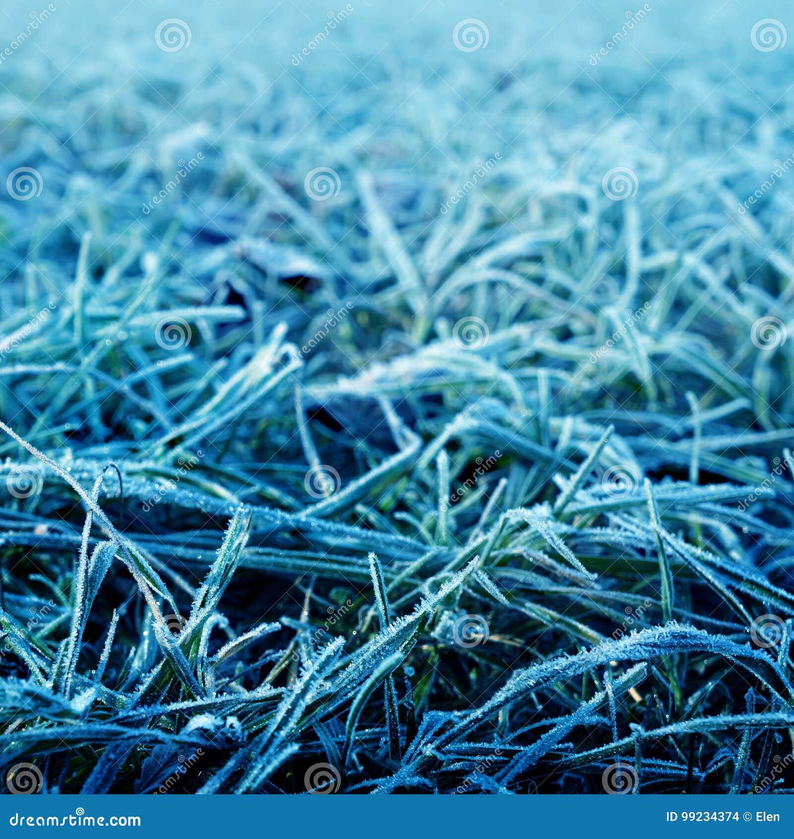 Blått frostigt gräs