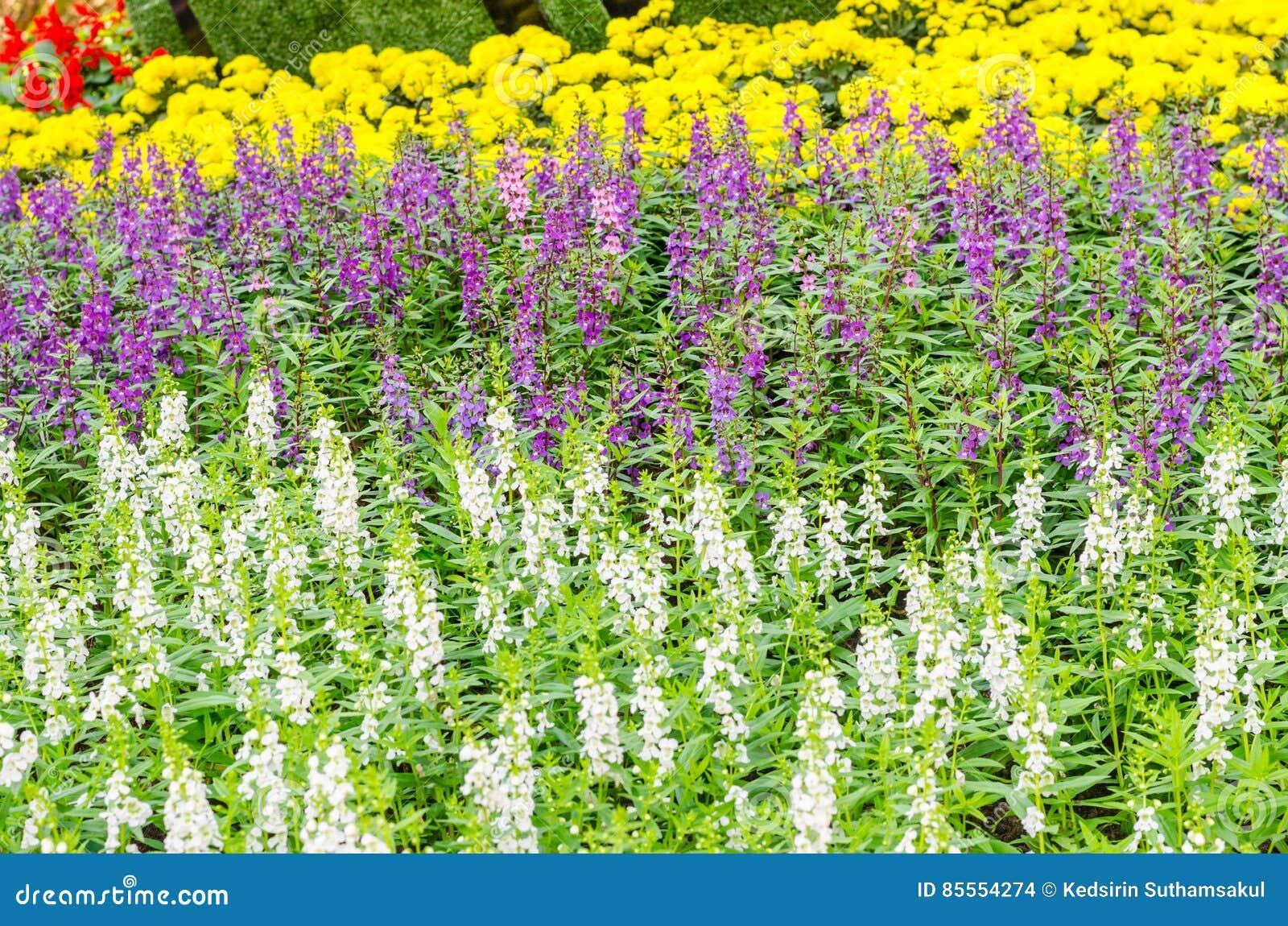 Blühende Blume Garten im im Freien