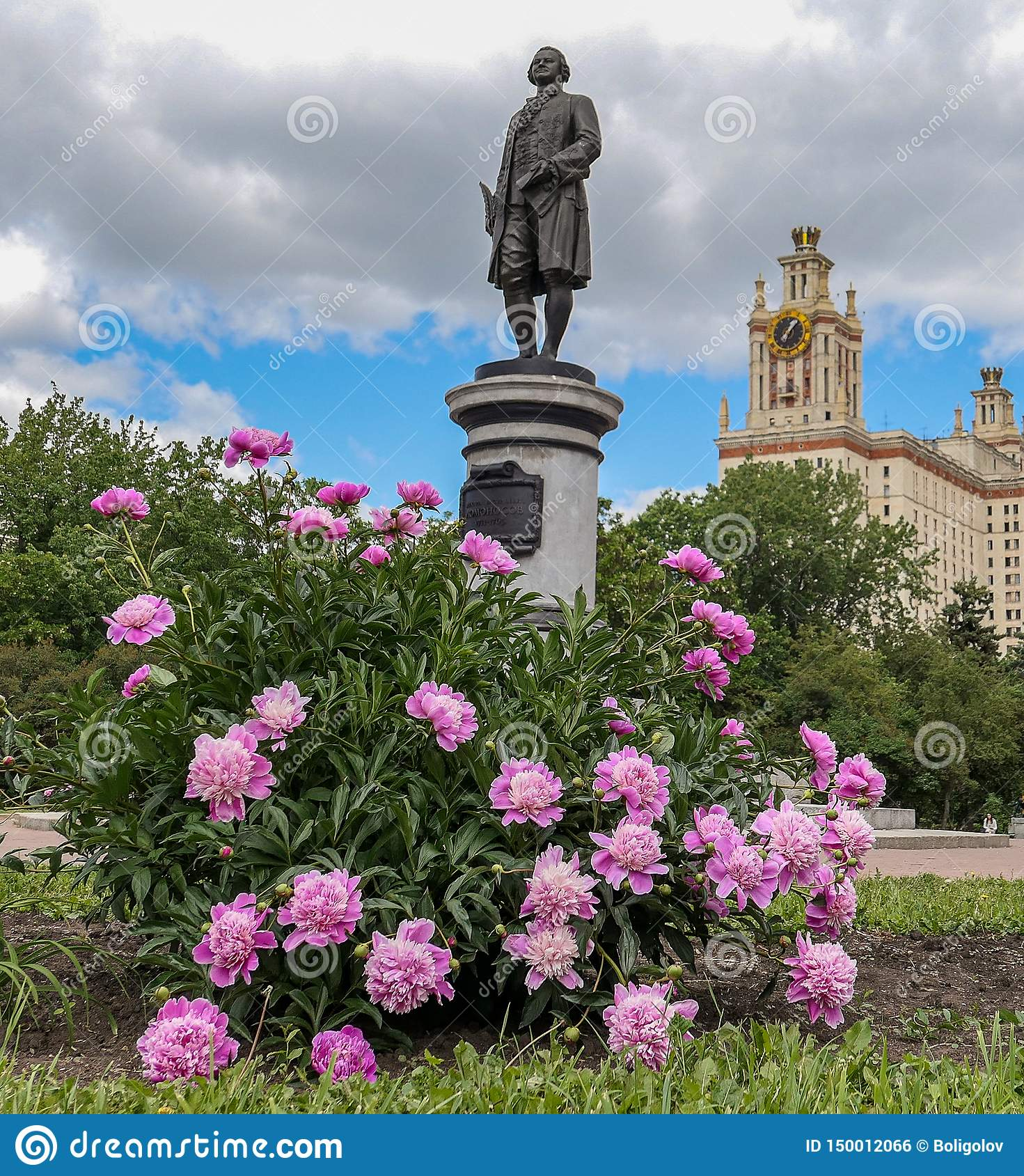 Blühende Pfingstrosenblumen im sonnigen Campus von Moskau-Universität