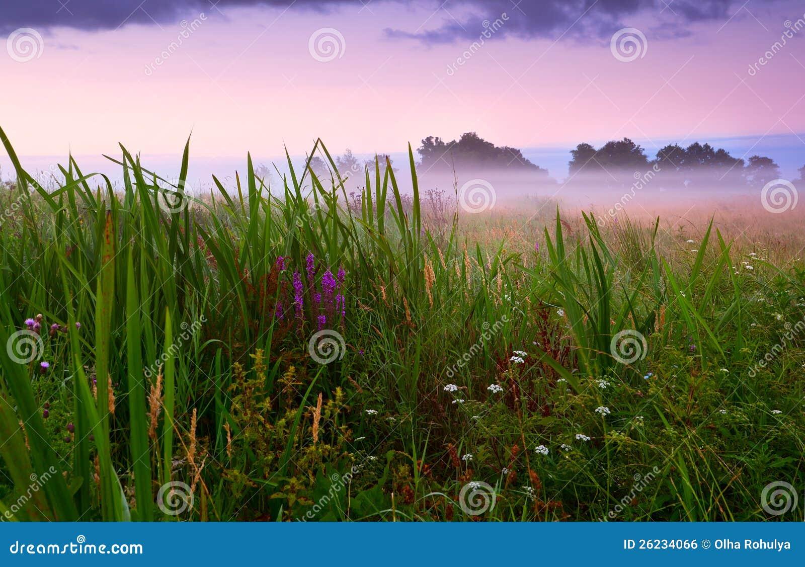 Blühende Wiese im Nebel
