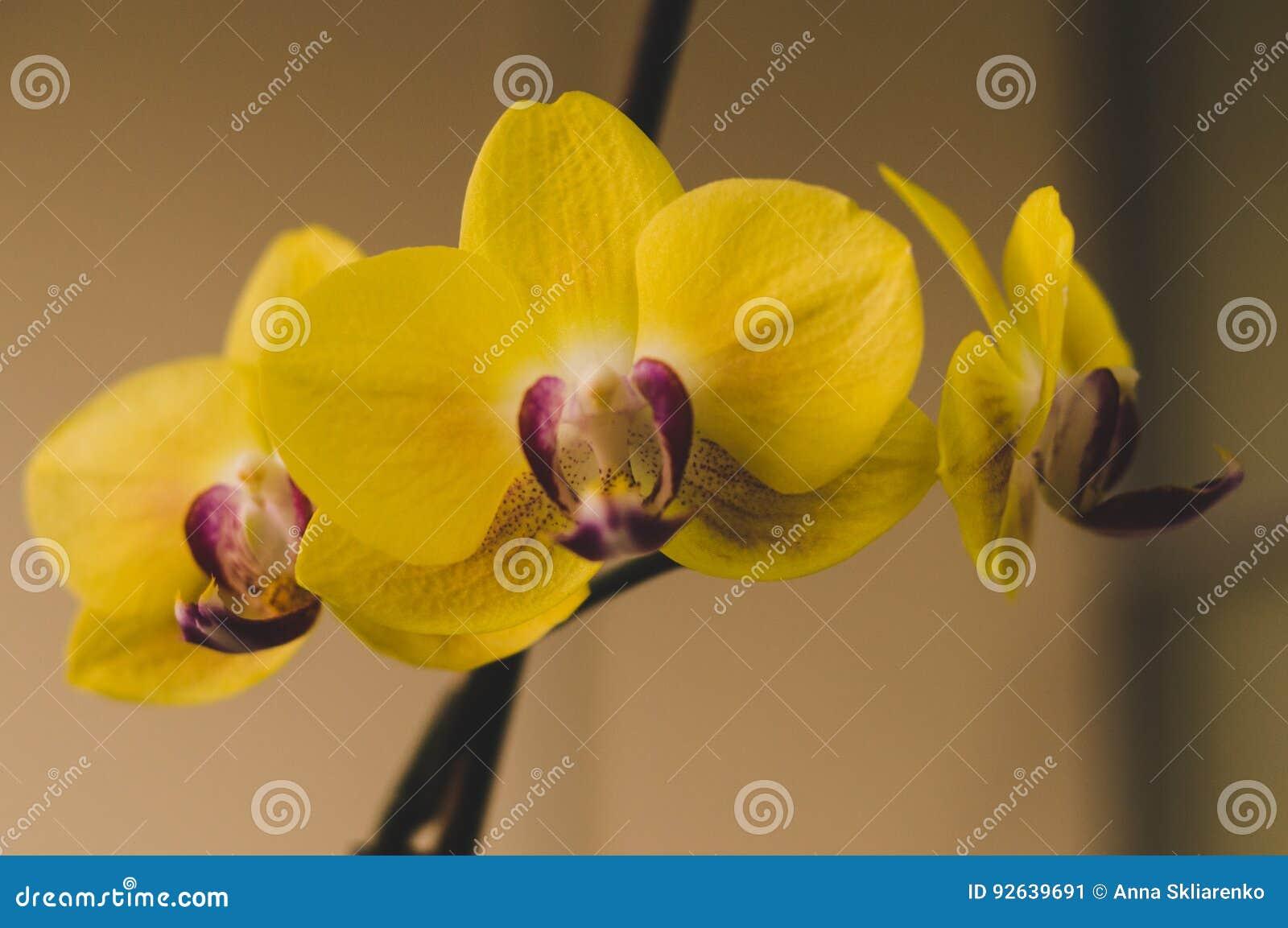 Bluhende Zimmerpflanzen Zimmerpflanzen Stockbild Bild Von