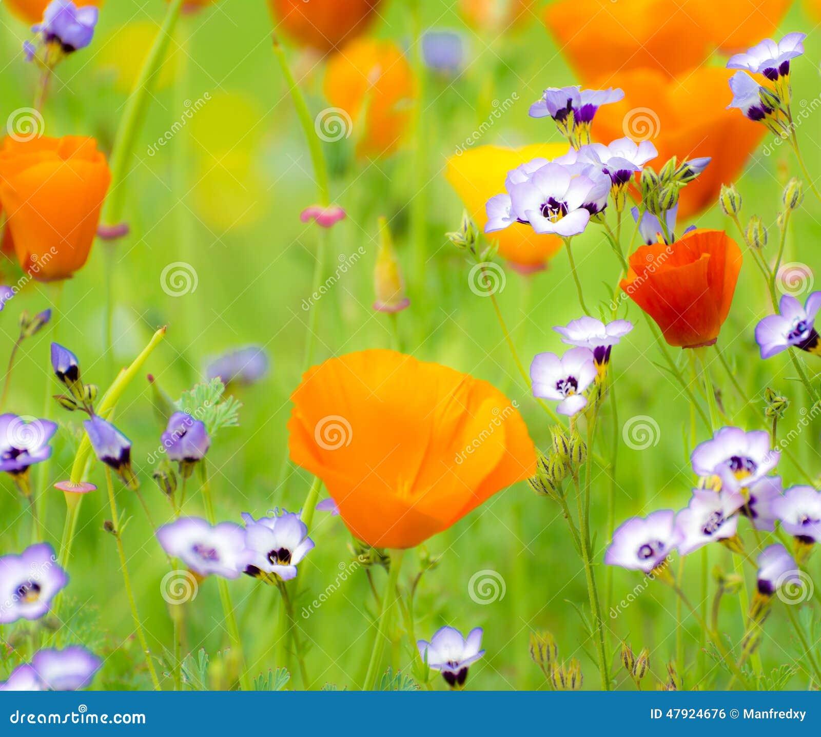 Blühender Sommer Medow