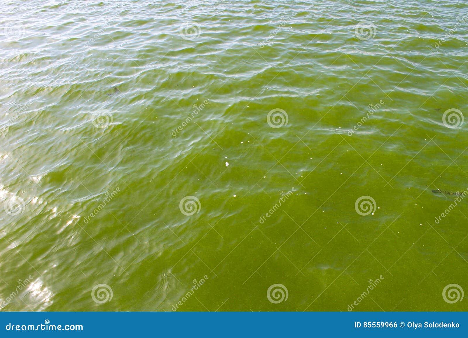 Blühendes grünes Wasser