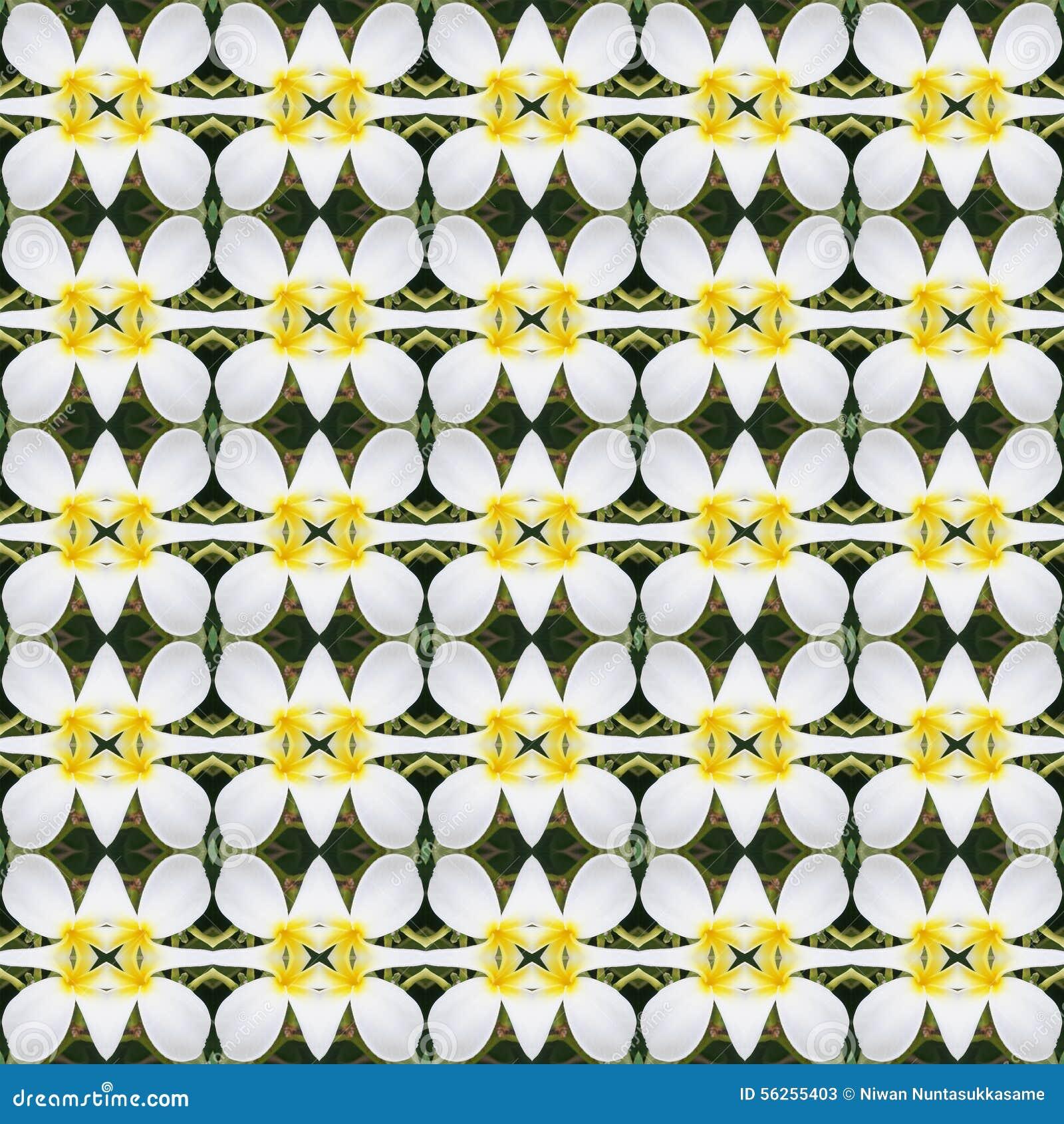 Blüte des weißen Frangipani blüht nahtloses
