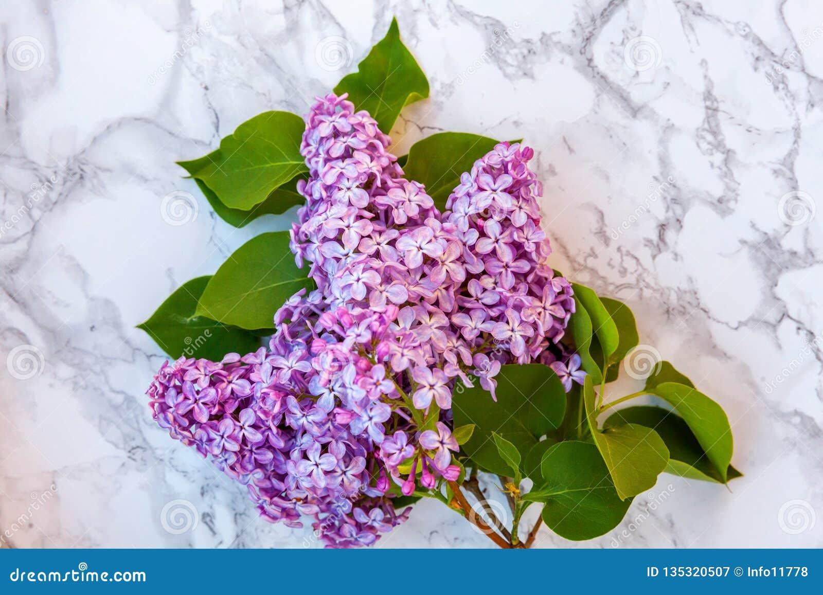 Blütenzweige der Flieder auf Marmorhintergrund
