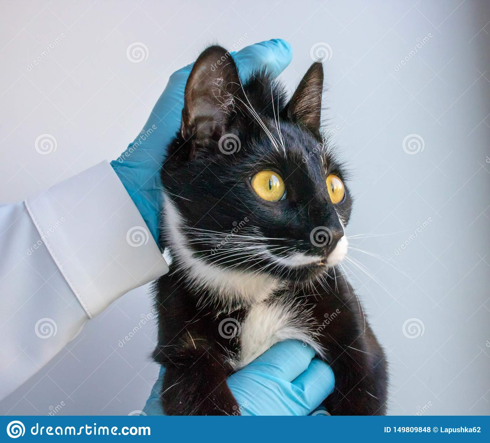 The blac cat keeps the doctor clinic