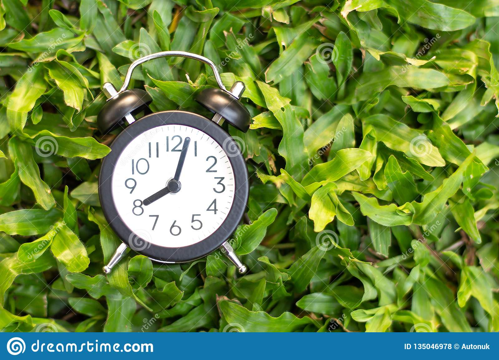 Black alarm clock on green grass background , time concept or start up