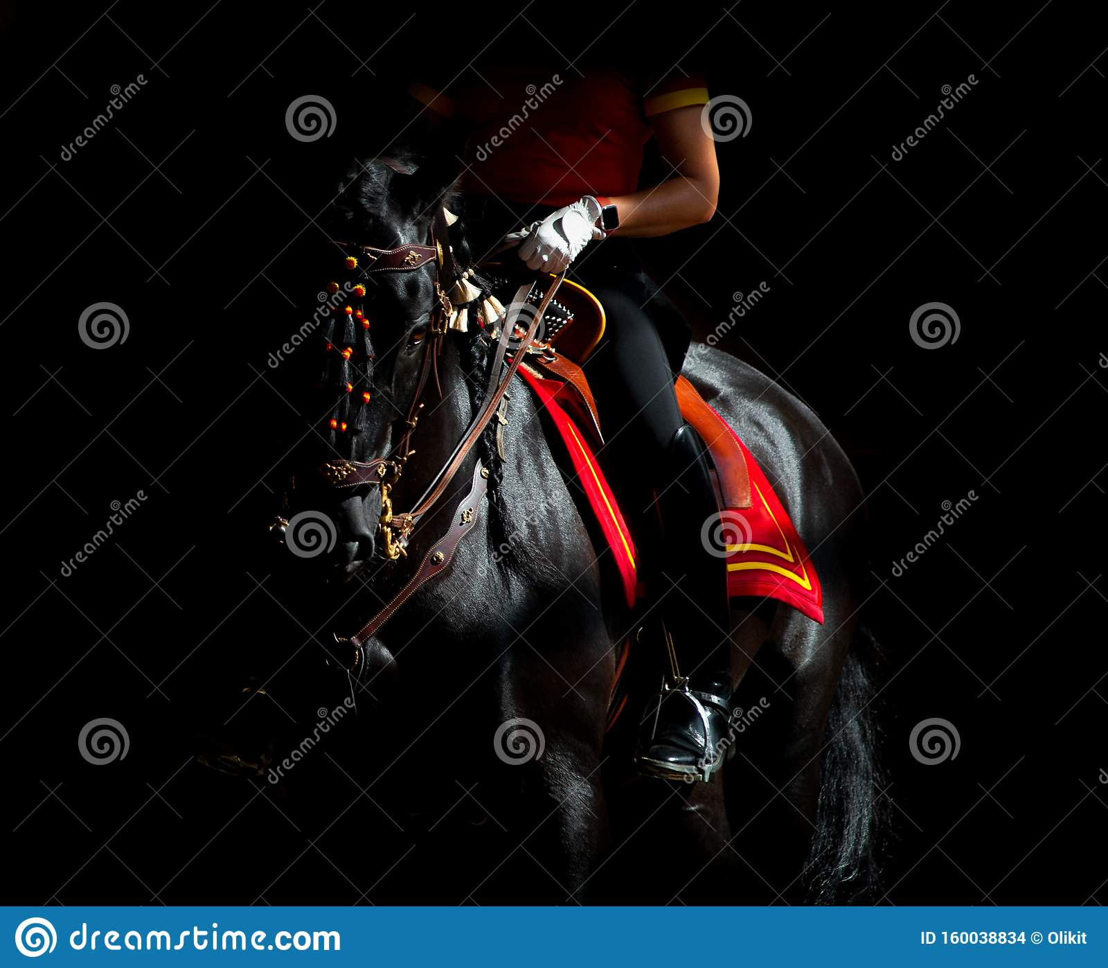 Black andalusian horse on dark background under the saddle