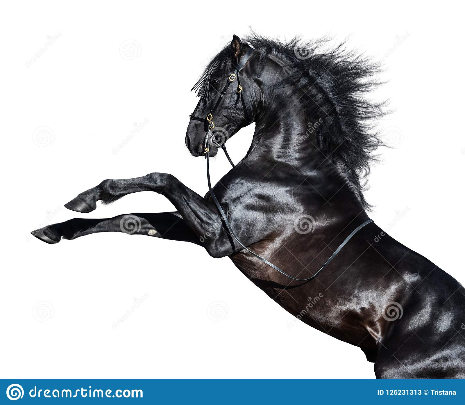 97 607 Black Horse Photos Free Royalty Free Stock Photos From Dreamstime