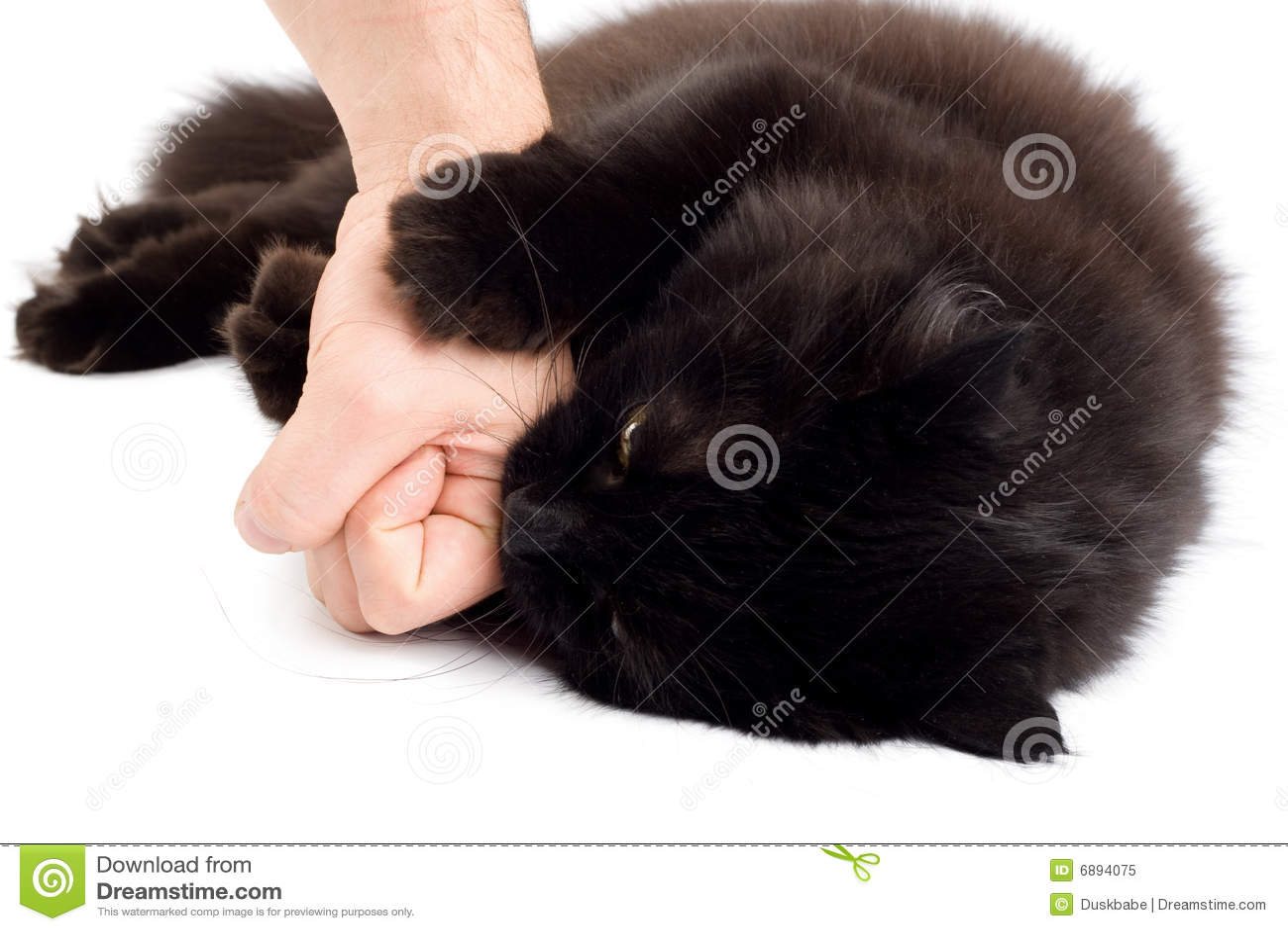 cat bite fever treatment