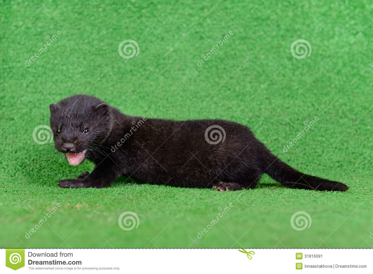black animal mink stock image image 31816091 weasel face clipart weasel clipart black and white