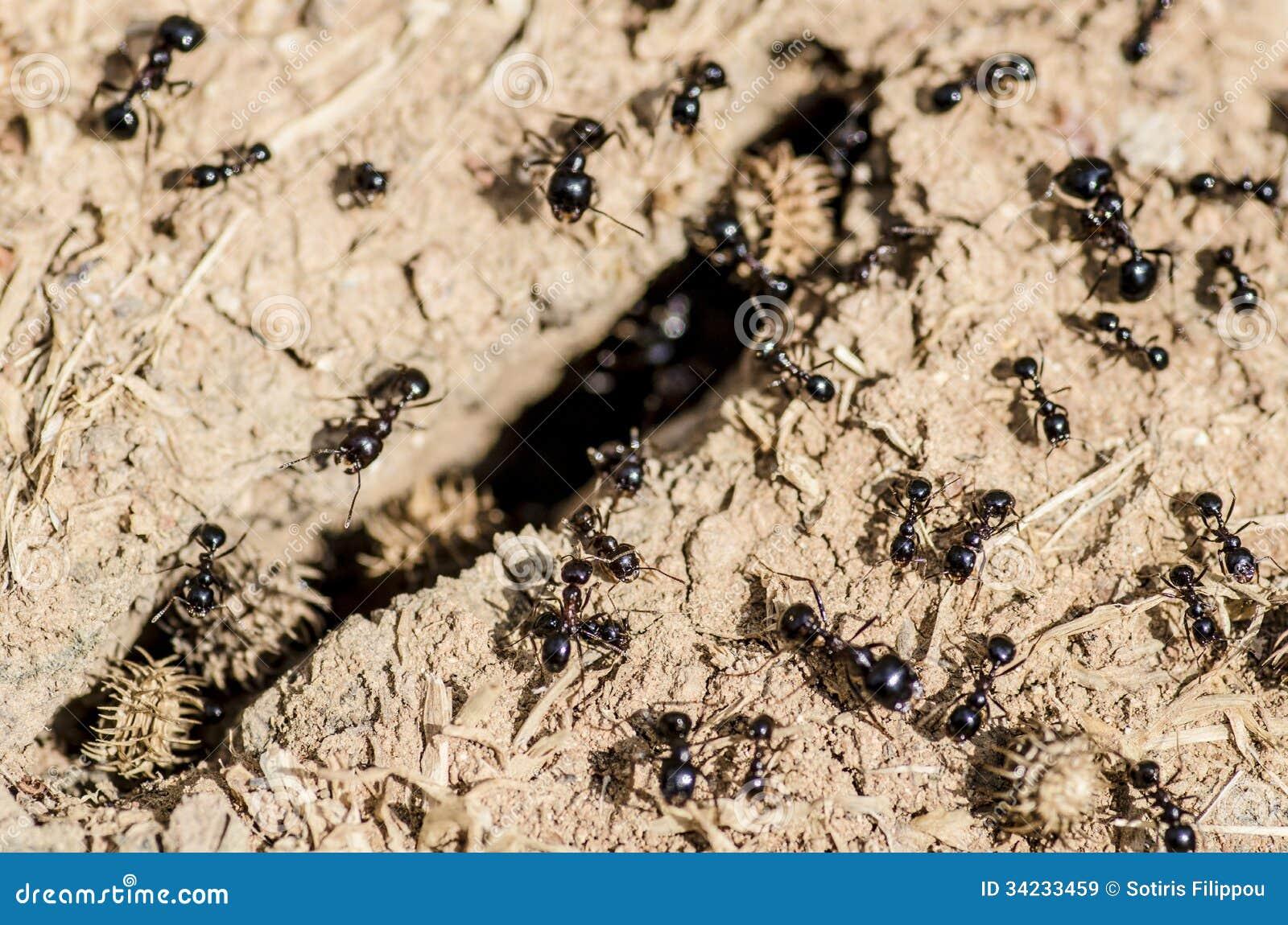 ants eat food on wall stock image 90816991. Black Bedroom Furniture Sets. Home Design Ideas