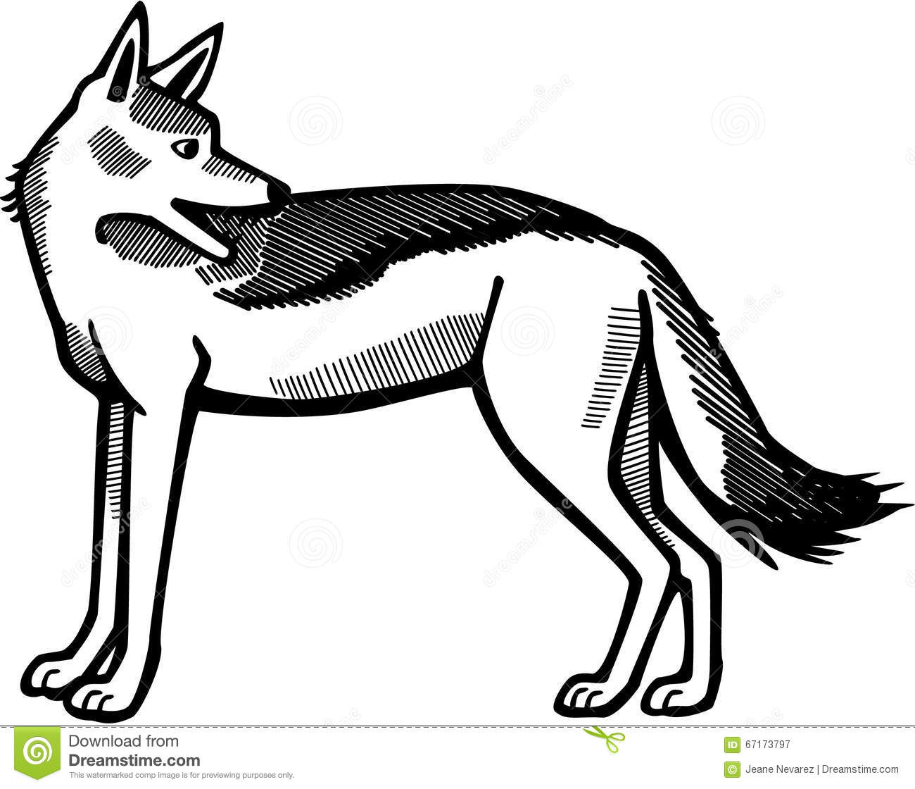 Vector Drawing Lines Html : Black backed jackal stock vector image
