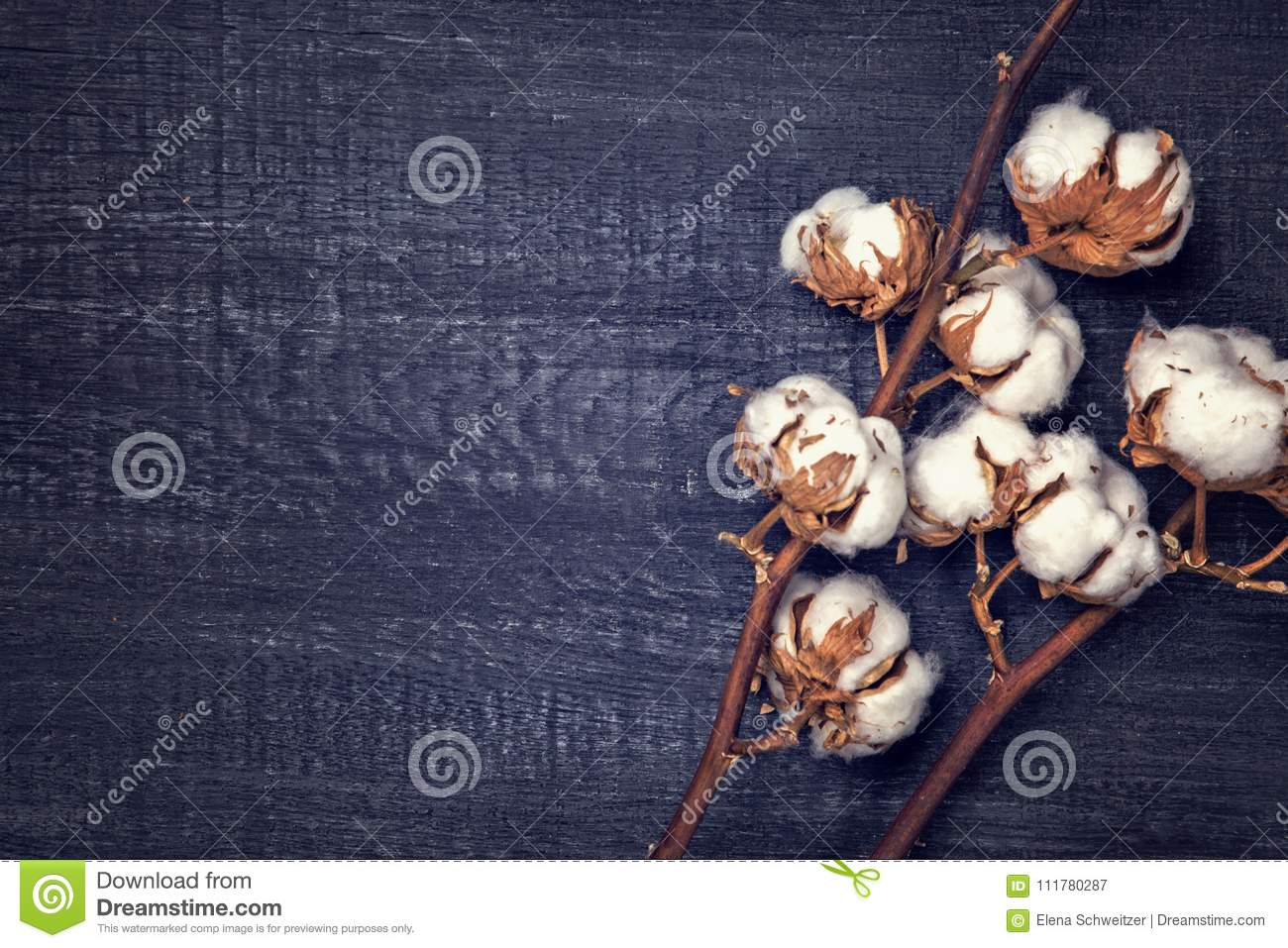 Black background with cotton flower