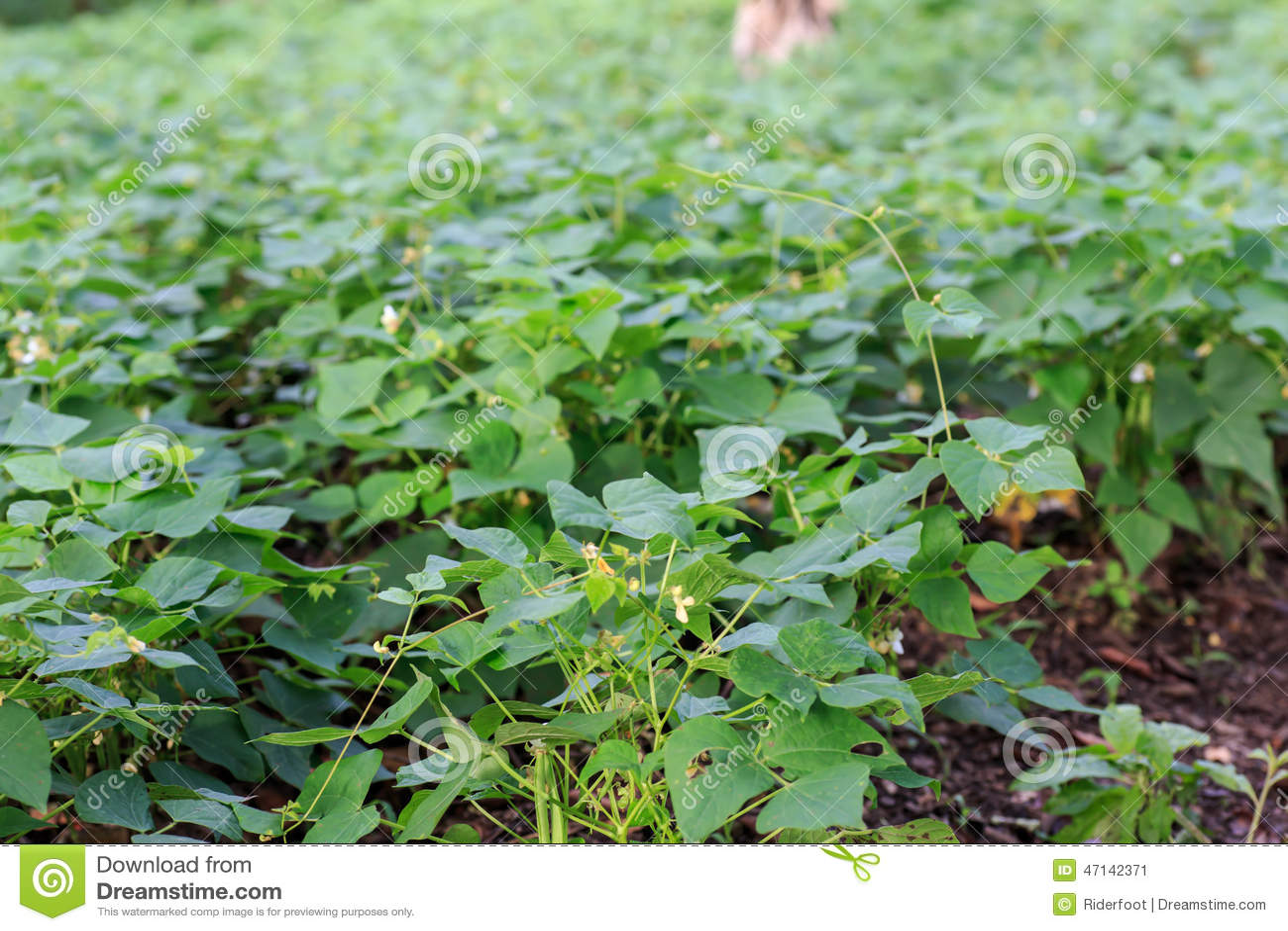 Nicaragua Plants