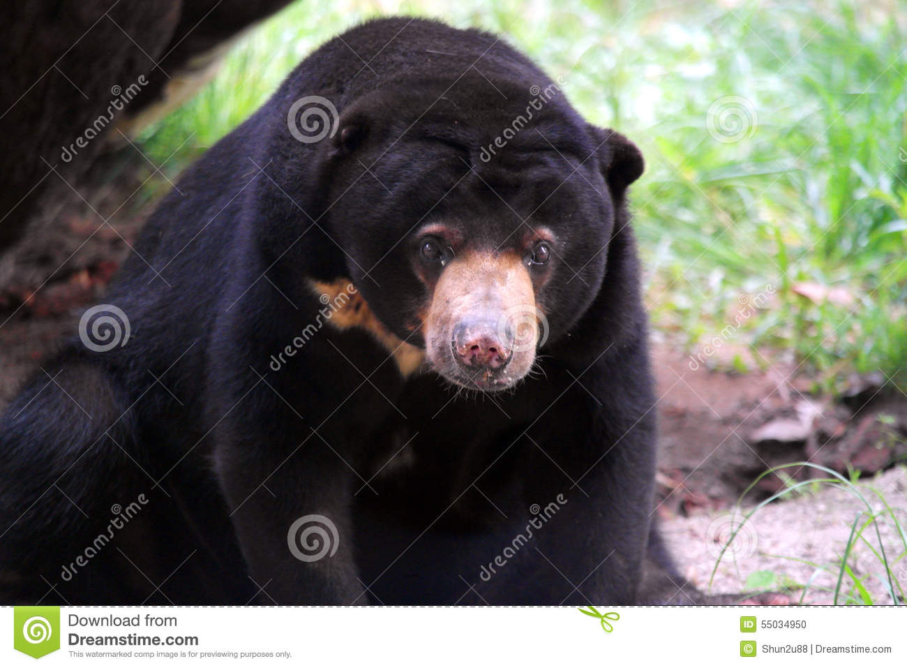 Black bear head profile - photo#19