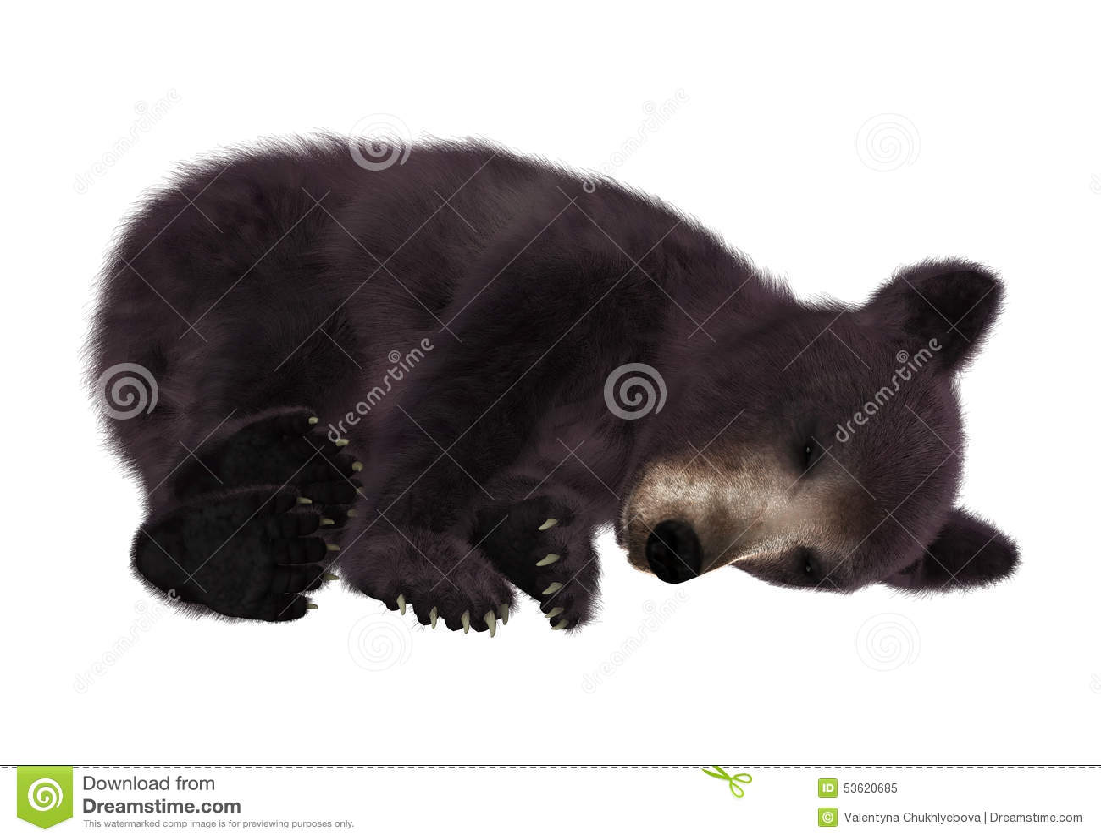 black bear cub stock illustration