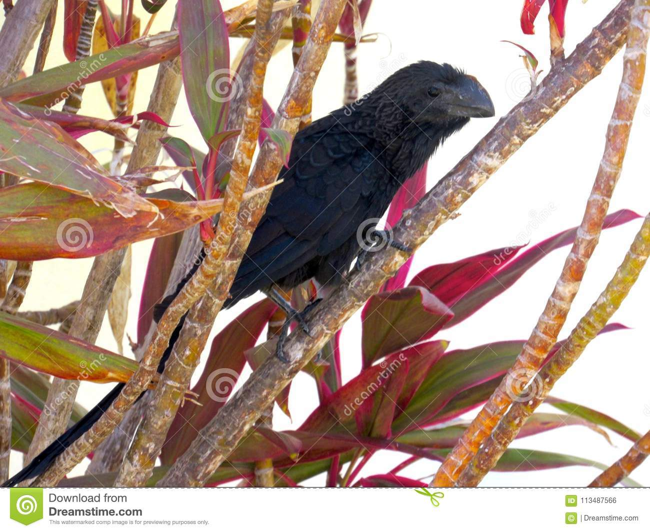 Black Bird On A Colorful Plant Stock Photo