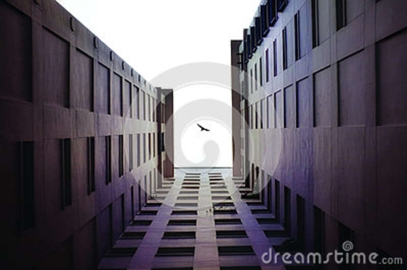 Download Black Bird Flying stock image. Image of architecture - 83023005