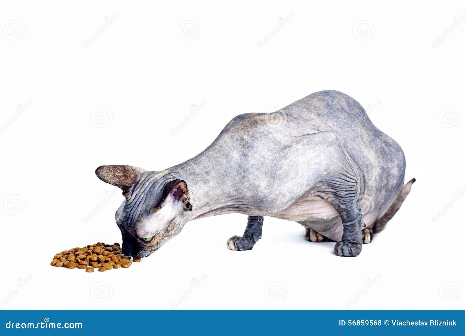 Sphynx Dry Cat Food