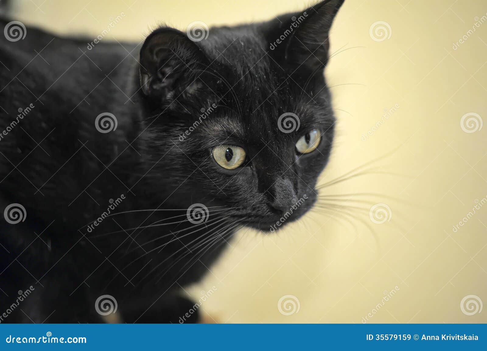 cat print tattoo