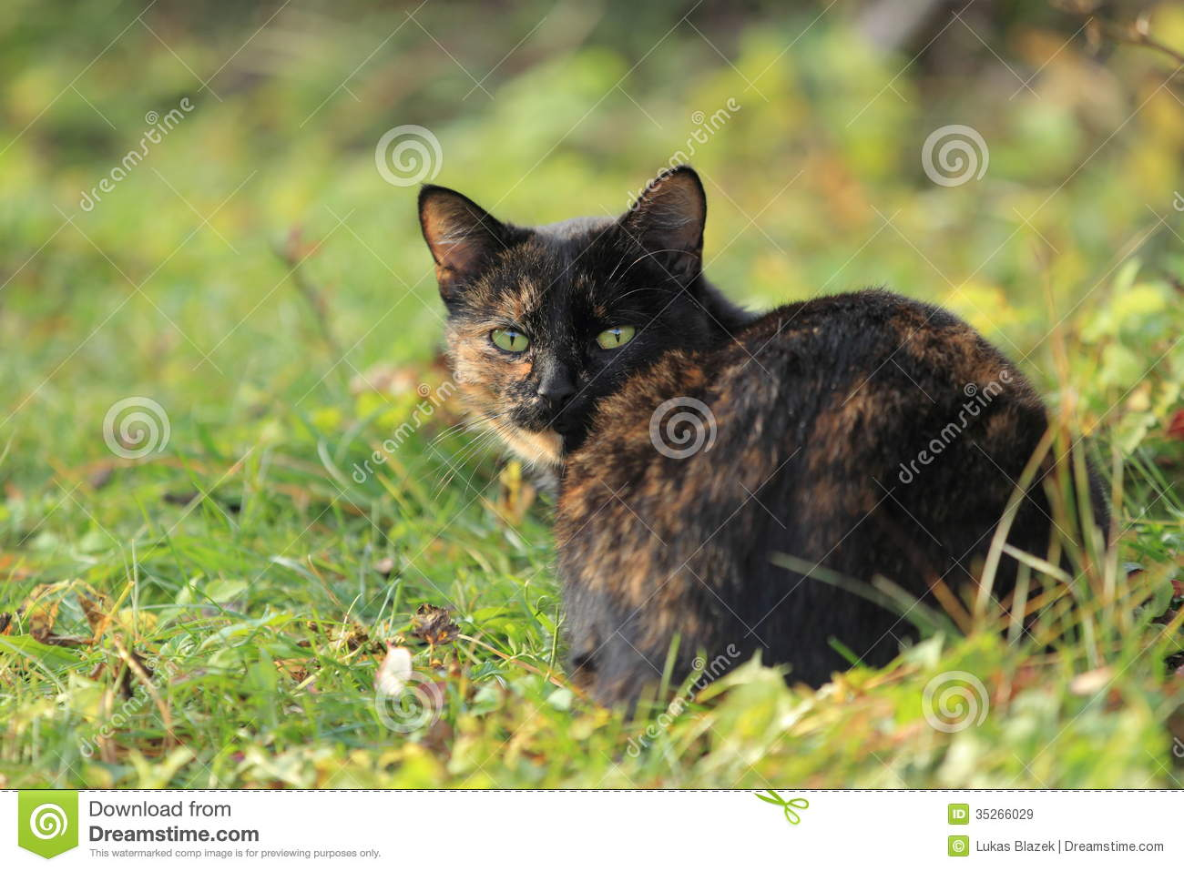 Black-and-brown Cat Royalty Free Stock Images - Image: 35266029