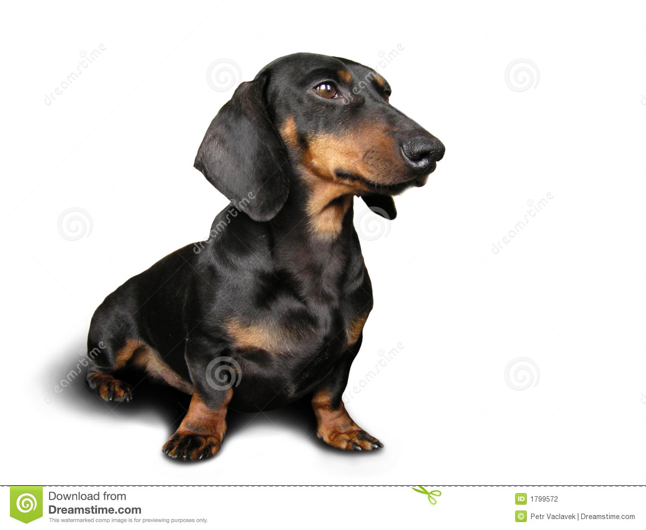 a dark brown dog My dog had watery light brown &now has really dark green loose mucusy stool  the dogington post is proud to do for the dog world what other great online newspapers.