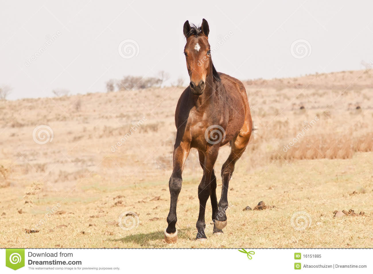 brown horse with black - photo #40