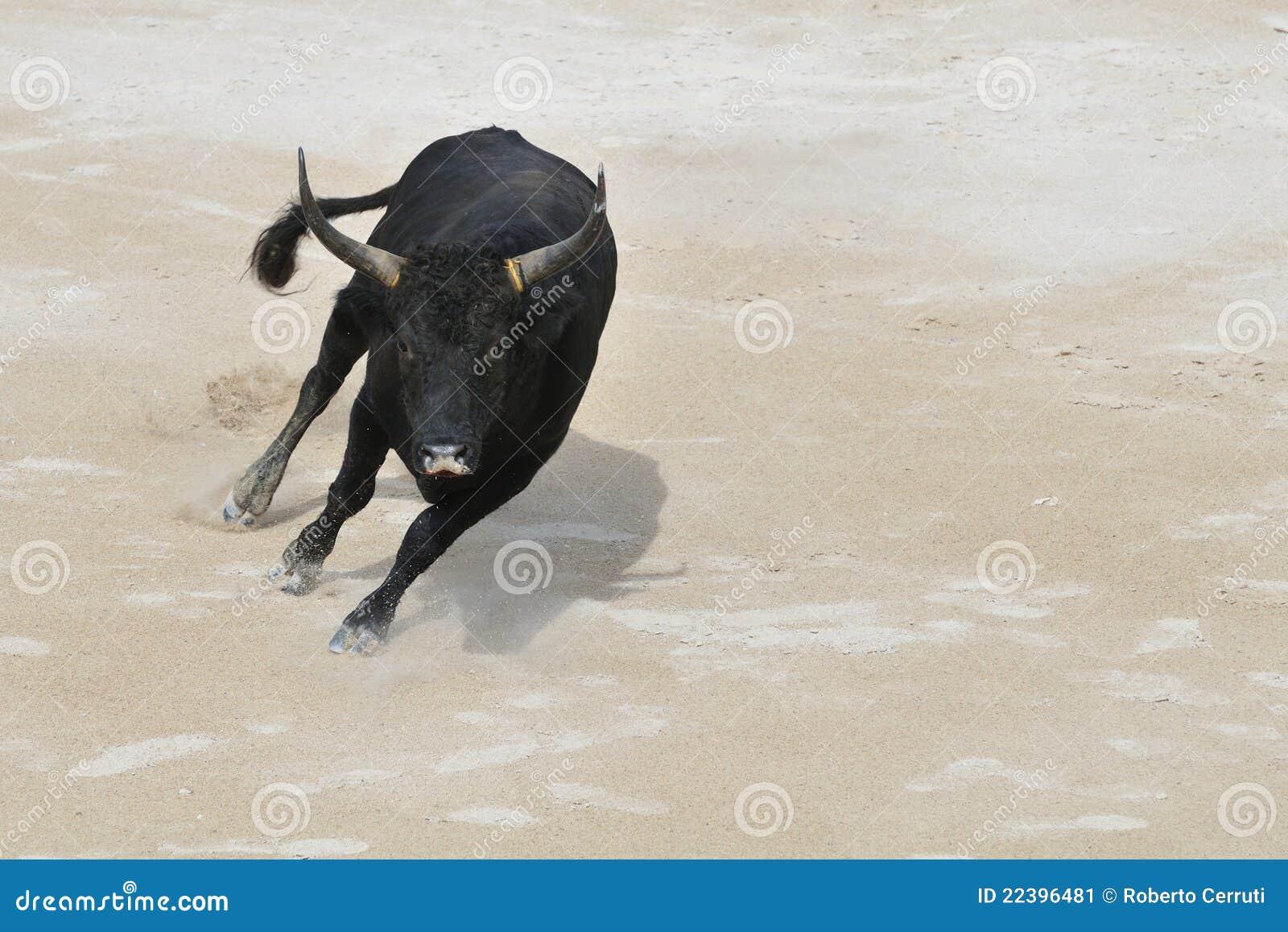 во сне убегала от черного быка этом