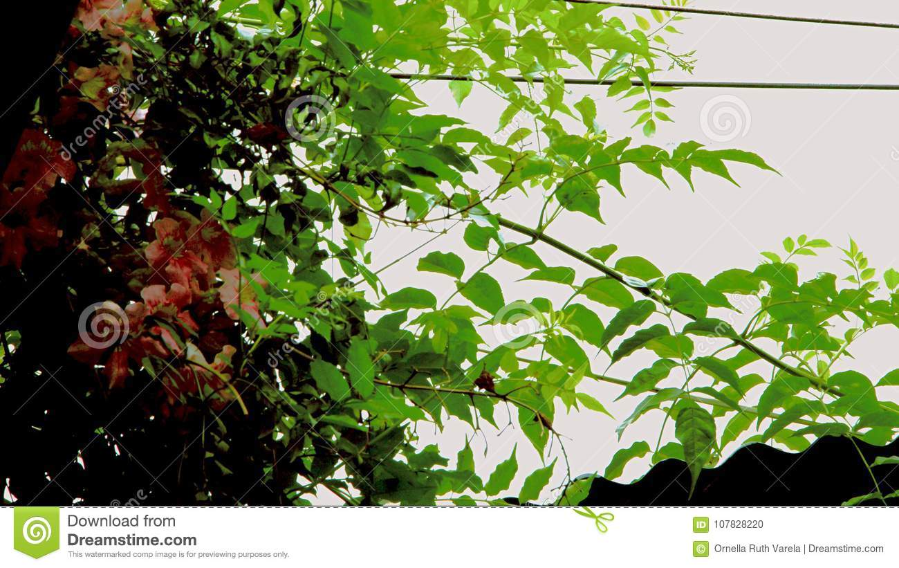 Between Black Cables And Green Branches Stock Photo - Image of ding ...