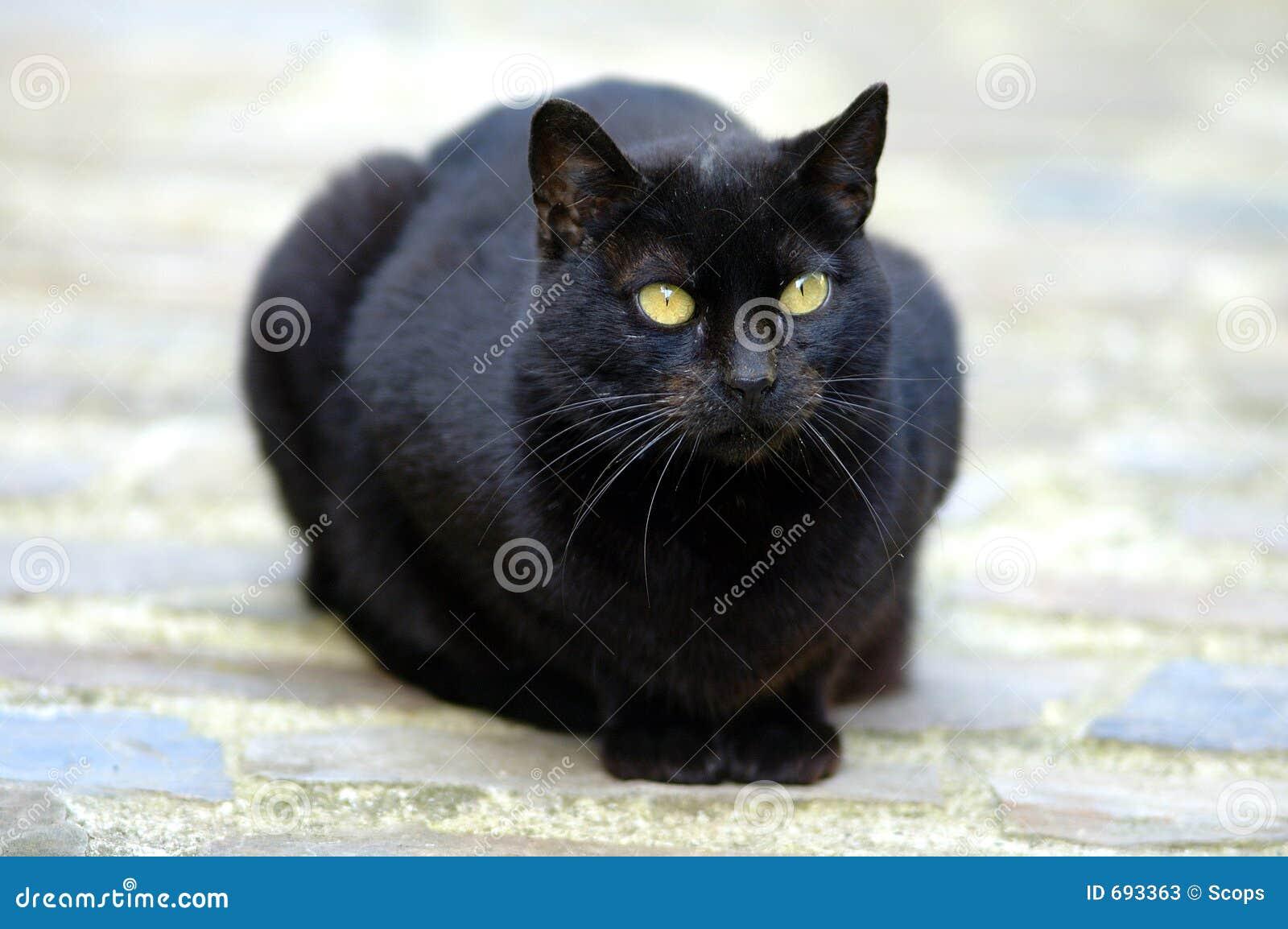 Blak Puss maturo nero micio Fanculo