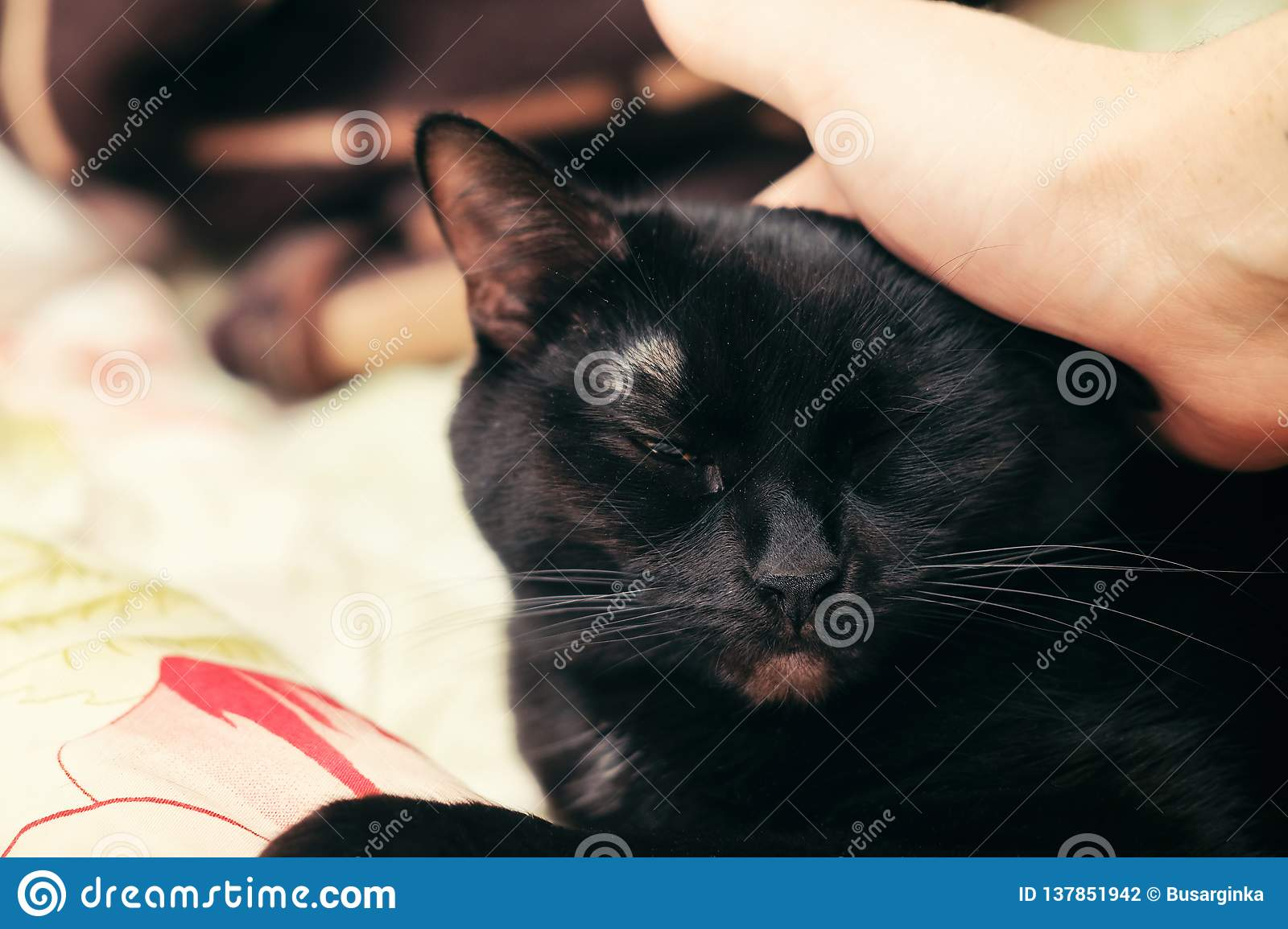 Black cat being petted on the head